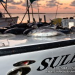 San Pedro Fishing Belize   Deep Sea Fishing   Reef Fishing (10)